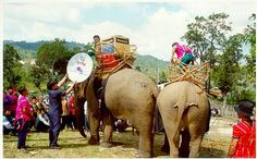 Mobile Libraries  Thailand  Thailand has a long history of mobile libraries. In Thailand, elephants have been used to transport books to remote areas. The Books-by-Elephant program continues to travel a twenty day journey spending a few days in each village.    Today, the supplies include laptops and satellite dish connections to the Internet. The photo below shows a recent example. Courtesy of Cambridge University Libraries Information Bulletin.