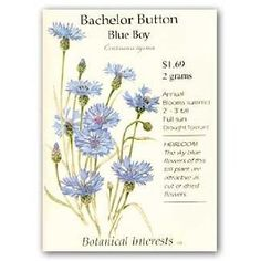 Bachelor button 'Blue Boy', by Botanical Interests. Source: Amazon.ca.  [bachelor button / cornflower, Centaurea cyanus, Asteraceae] Sky C, Bachelor Buttons, Seed Packets, Weed, Garden Tools, Flora, Heaven, Blue, Amazon