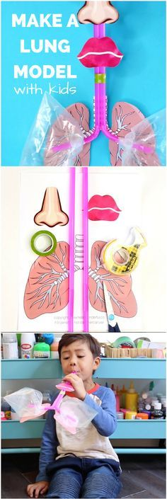 Teach kids lung body anatomy by making this simple straw lung model. Printable template included.