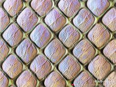 Geometría microscópica: el ojo de un camarón. | Matemolivares
