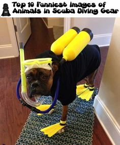 Top 10 Funniest Images of Animals in Scuba Diving Gear (10 Pics)