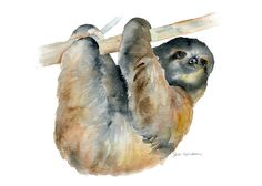 Sloth Watercolor Painting Giclee Print - 7 x 5 - Fine Art by SusanWindsor on Etsy https://www.etsy.com/listing/175779937/sloth-watercolor-painting-giclee-print-7