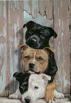 Uplifting So You Want A American Pit Bull Terrier Ideas. Fabulous So You Want A American Pit Bull Terrier Ideas. I Love Dogs, Cute Dogs, Staffy Dog, Bull Terrier Dog, Mundo Animal, Dog Paintings, Beautiful Dogs, Dog Art, Belle Photo