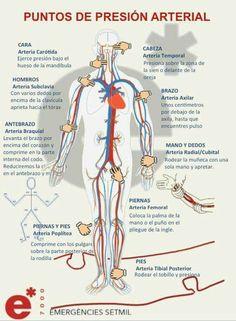 Puntos de presión arterial