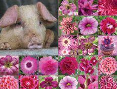 http://fmlkunst.home.xs4all.nl/varkenskaarten2/varkenskaarten2.htm - Jolande - Arjen - Aike