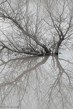 Ghostly Reflections - spindly tree branches; organic patterns; natural texture inspiration