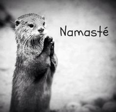 Namaste and cuteness combined? I THINK YES!!!!