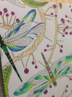 WIP From Wild Savannah By Millie Marotta Using My Trusty Whsmith Pencils
