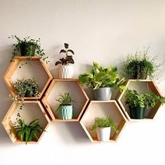 Set of 6 Medium Deep Hexagon Shelves, Honeycomb Shelves.- Set of 6 Medium Deep Hexagon Shelves, Honeycomb Shelves, Floating Shelves, Geometric Shelves - Geometric Shelves, Honeycomb Shelves, Hexagon Shelves, Geometric Decor, House Plants Decor, Plant Decor, Plants In Living Room, Plants In Bedroom, Plants On Walls
