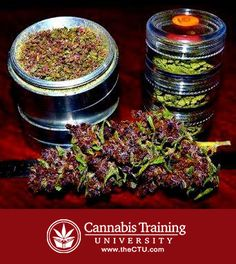Looking to get in the booming 40 billion dollar cannabis industry? Start your cannabis career with cannabis certifications from Cannabis Training University. Go to the ultimate thc university, Cannabis Training University. Learn how to grow cannabis from some of the world's top growers! Save money on your grow, grow better cannabis! Pass the cannabis exams and get CTU certified today! Want to start a 420 career? Looking for the best stoner's cookbook? Enroll today at www.thectu.com