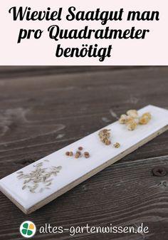 Samenlisten für das nächste Jahr zu erstellen, ist eine beliebte Aufgabe für den Winter. Jetzt können Pflanz- und Setzpläne erstellt werden und anschließend eingekauft werden.