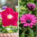 10 λουλούδια που ανθίζουν τον Μάϊο σε κήπο και σε γλάστρα Plants, Gardening, Lawn And Garden, Plant, Planets, Horticulture