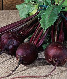 Detroit Dark Red Organic Beet Seeds and Plants, Vegetable Gardening at Love Beets, Red Beets, Fresco, Succession Planting, Organic Gardening, Vegetable Gardening, Organic Plants, Burpees, Backyard Farming