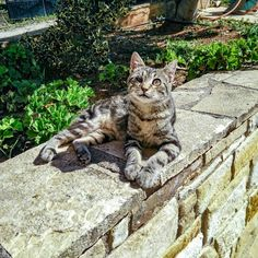Cats Of Instagram, Sunnies, Chill, Travel Photography, Relax, Animals, Animales, Sunglasses, Animaux