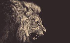 Classy Lion Wallpaper #respect