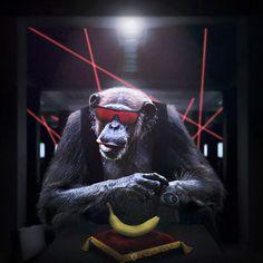 Mono ladrón (montaje para concurso).