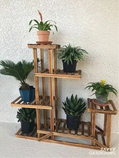 Learn how to create a beautiful indoor garden using the best houseplant for your light levels, humidity, and location. Turn your home into an oasis of green using these tips for growing an indoor garden. #indoorgardening #houseplants Different Plants, Types Of Plants, Air Plants, Indoor Plants, Unusual Flowers, Winter Light, Hanging Pots, Plant Shelves, Diy Garden Projects