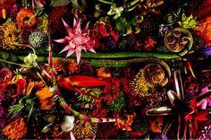 【写真集】東信、椎木俊介「植物図鑑」(青幻舎)より  http://photo.sankei.jp.msn.com