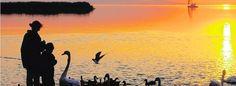 Neusiedler See im Burgenland lockt mit Wasserbüffel und Steppenrind Safari, Rind, Celestial, Sunset, Outdoor, Grey Goose, Types Of Animals, Road Trip Destinations, National Forest