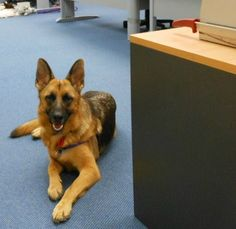 "6 Tips for a Happy ""Take Your Dog to Work Day."" My students reeeeaaally want to meet Norah!"
