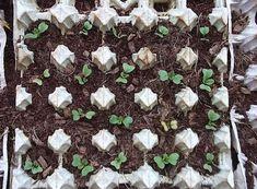 """Mistress on a note"" Vertical Vegetable Gardens, Outdoor Projects, Indoor Garden, Gardening Tips, Diy And Crafts, Flora, Succulents, Vegetables, Mistress"