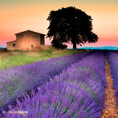 Watch the sunset as you smell the lavender in Valensole, Provence in France. For more UK & Europe travel inspiration, visit www.hot.co.nz