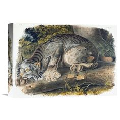 "Global Gallery 'Canada Lynx' by John James Audubon Painting Print on Wrapped Canvas Size: 25.6"" H x 36"" W x 1.5"" D"