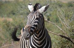 Pilanesberg National park-Taken by Jason Edgar