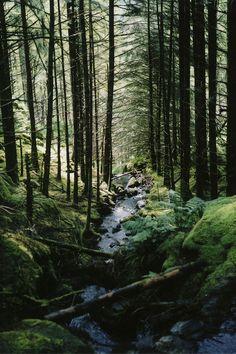 Woodland at Gougane Barra Forest Park, Gougane Barra, West Cork, Ireland Beautiful Forest, Beautiful World, Beautiful Places, Forest Park, Tree Forest, Conifer Forest, Wild Forest, Forest River, All Nature