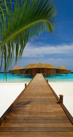 Lily Beach - Maldives