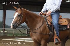 In the AQHA show industry, many respected horse trainers point to draw reins as a useful part of their horse-training programs, for a variety of reasons. Western Riding, Horse Riding, Horse Information, Horse Training Tips, Horse Care, Equestrian Style, Show Horses, Horseback Riding, Draw