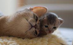 Kitten: Cute *-*