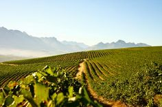 Miguel Chan: DISTELL SAYS 2014 A GREAT VINTAGE FOR THE COMPANY