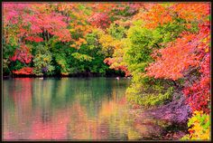 Autumn is the second spring where every leaf is a flower. -- Albert Camus