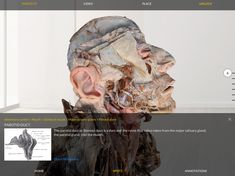 Human Anatomy, Augmented Reality, Mobile App, Ios, Android, Medical, Apple, Play, Store