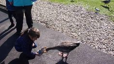 One super cute video of Sophie feeding one of the birds at Slimbridge directly from her bird seed bag. If you like the video, why not come and vista Sophie a. Family Video, Very Hungry, Bird, Videos, Youtube, Birds, Youtubers, Youtube Movies