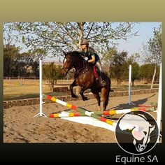 NA - Registered Thoroughbred - Horses for Sale Detail Thoroughbred Horse, Horses For Sale, Animals, Animales, Animaux, Animal, Animais