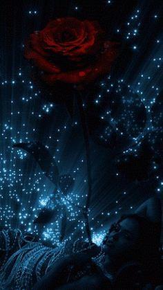 ღ Rosa Animation ღ✟ Flower Phone Wallpaper, Heart Wallpaper, Butterfly Wallpaper, Galaxy Wallpaper, Wallpaper Backgrounds, Flowers Gif, Beautiful Rose Flowers, Beautiful Moon, Pretty Wallpapers