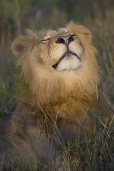 ~~Meditation Photo ~ Lion by Eliane ROSSILLON | National Geographic Your Shot~~