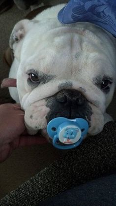 Baggy Bulldogs-----I can't stand it---make it stop!!!! :)
