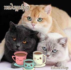 Πανέμορφα γατάκια σας λένε όμορφες καλημέρες! - eikones top Good Morning Messages, Cats, Animals, Good Morning Wishes, Gatos, Animales, Animaux, Animal, Cat