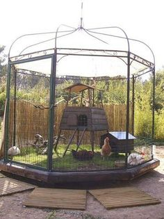 Awesome repurposed gazebo for chicken and rabbit housing.