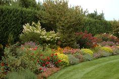 Herbaceous Border, Earth, English, Plants, English Language, Plant, Planets, Mother Goddess, World