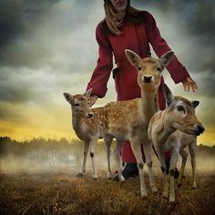 Photomontages of animals in stories by Tom Chambers