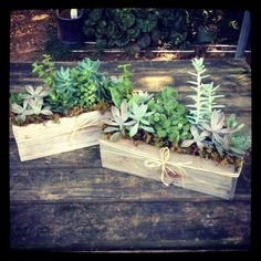 White-washed wooden trough centerpieces headed to Whole Foods Market-Ponce De Leon. Great look to transition into fall! www.southeastsucculents.com Wooden Trough, Whole Foods Market, Indoor Plants, Terrarium, Whole Food Recipes, Floral Arrangements, Boudoir, Succulents, Centerpieces
