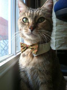 I want that tie! Do they have girl cat ties? En mi cabeza tengo un gato así! Elegante, con manchas de tigre, con el escarabajo egipcio en la frente (Horus). Ojos verdes. Joven.