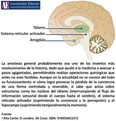 Infografía Neurociencias: Anestesia general.  Material de uso libre, sólo se pide citar la fuente (Asociación Educar).  Más infografías: http://www.asociacioneducar.com/ilustraciones  Asociación Educar Ciencias y Neurociencias aplicadas al Desarrollo Humano www.asociacioneducar.com