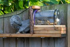 Simple Diy Squirrel Feeder - Diy Jar Squirrel Feeder Squirrel Feeder Diy Diy Squirrel Feeder Squirrel Feeder Diy Squirrel Feeder Bird Gettin Squirrely Easy Diy Squirrel Feeder You. Squirrel Feeder Diy, Squirrel Home, Diy Bird Feeder, Diy Garden Projects, Wood Projects, Outdoor Projects, Bird House Feeder, Homemade Bird Feeders, Diy Upcycling