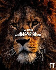 io - The only tool you need to launch your online business Citation Entrepreneur, Entrepreneur Motivation, Marketing Dashboard, Quote Citation, French Quotes, Animal Photography, Instagram Feed, Lions, Ecommerce
