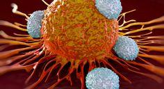 #Asma Diferencias en las células T pueden revelar la susceptibilidad a la enfermedad